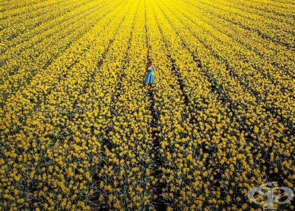 Вижте невероятната трансформация на Холандия, когато 7 милиона лалета цъфнат наведнъж