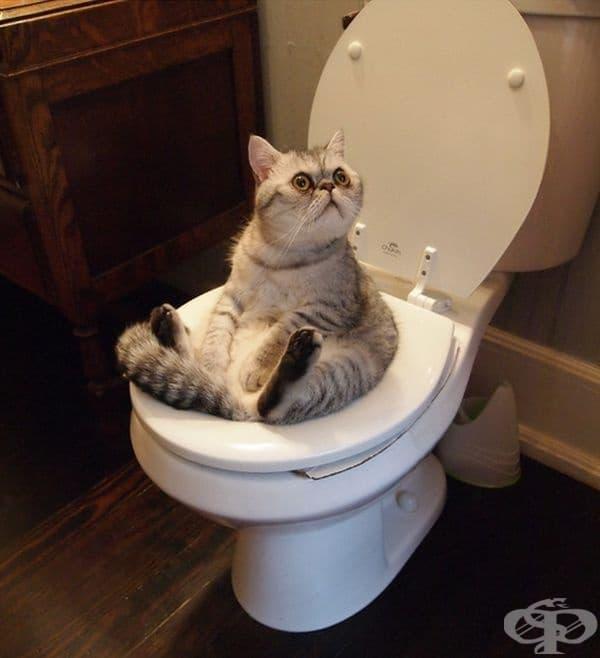 """""""Защо не почукахте, преди да влезете в тоалетната?"""""""