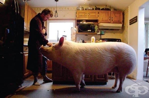 За две години Естер е качила от 1,8 кг до 294 кг.