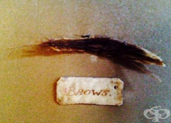 Вежди от козина на мишка. През 18-ти век са били модерни изкуствените вежди. Дамите са бръснели своите и са залепяли косми от мишки твърде нависоко на лицето, за да придобият саркастичен вид.
