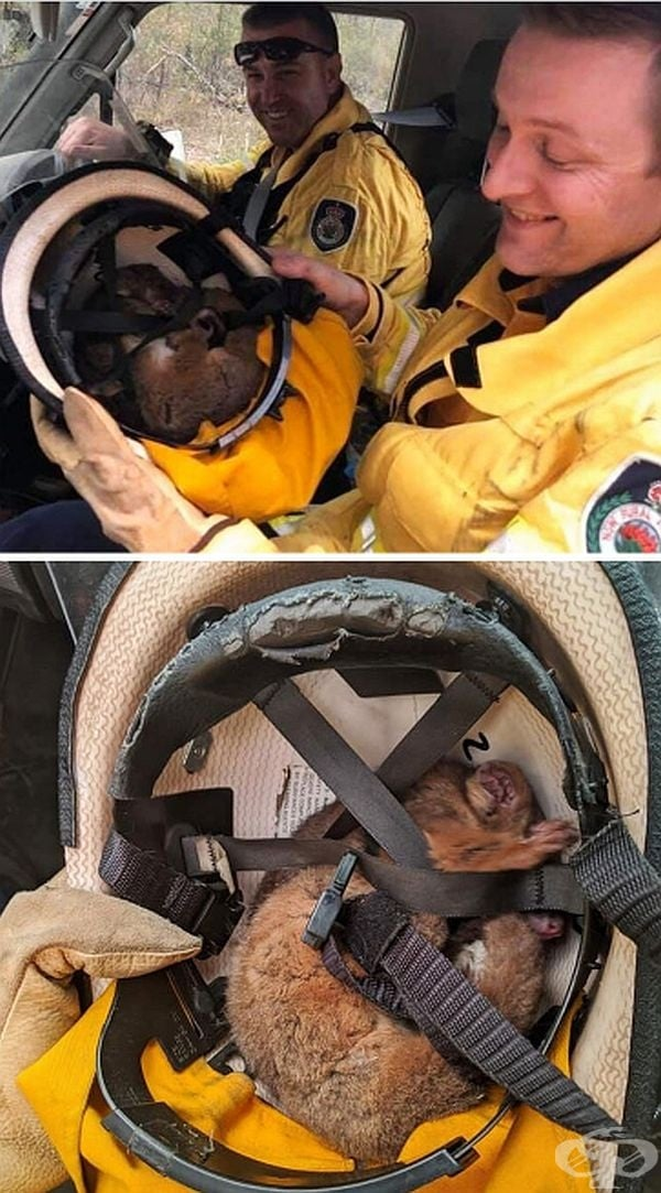 Доброволци пожарникари, които продължават да помагат в спасяването на животни и потушаването на пламъците.