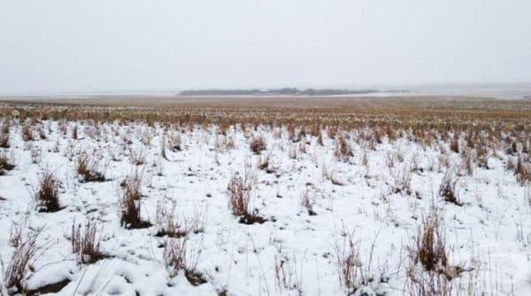На тази снимка има 500 овце. Виждате ли поне една от тях? Погледнете следващото изображение.