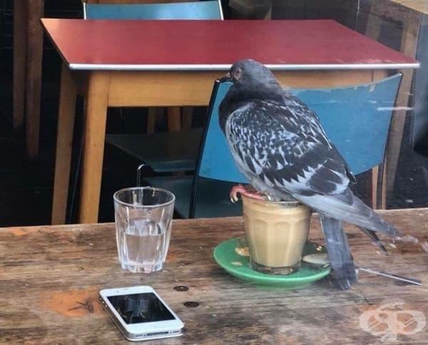 Когато си мислите, че денят ви е прекрасен, виждате пазител на вашето кафе.