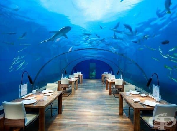 """Ресторант """"Ithaa"""", остров Конрад Рангали, Малдиви. Рекламира се като първия стъклен ресторант под вода на Малдивите. Предлага 16 вида ястия, изглеждащи като произведение на изкуството. Гледката е свободния живот на акули и други морски обитатели."""