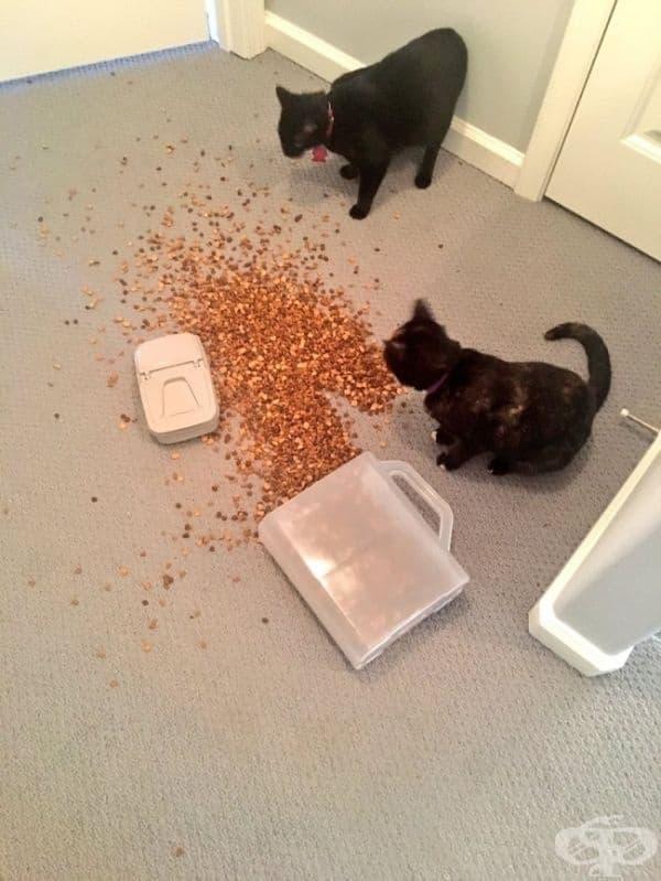 Излишно е да казваме, че храната е по-вкусна от пода, отколкото от купата.