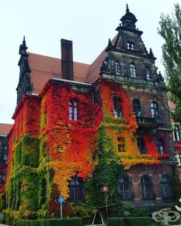 Многоцветен бръшлян постепенно покрива сградата.