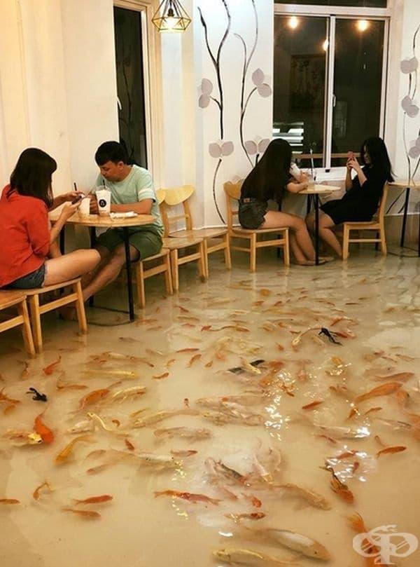 В град Хошимин, Виетнам е открито необичайно заведение. На пода, в краката на клиентите плуват малки рибки.