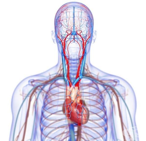 Факт е, че поради възпаление на венците бактерии могат да влязат в системата на кръвообращението и да предизвикат възпаление. Рискът от сърдечно заболяване при пациенти с периодонтално заболяване е 20% по-висок.