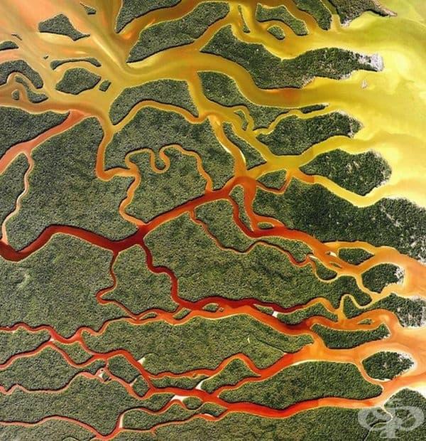Национален парк Евърглейдс, Флорида.