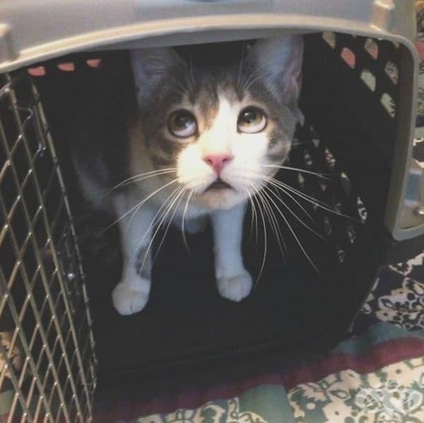 """""""Това е изражението на котката ми, когато трябва да излезе за преглед при ветеринаря."""""""