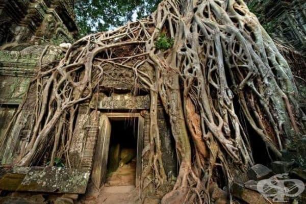 Храм в Ангкор Ват, Камбоджа.