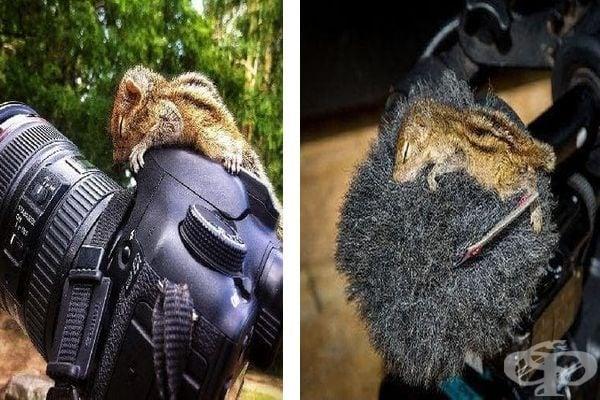 Трогателни истории за спасени катерички по света