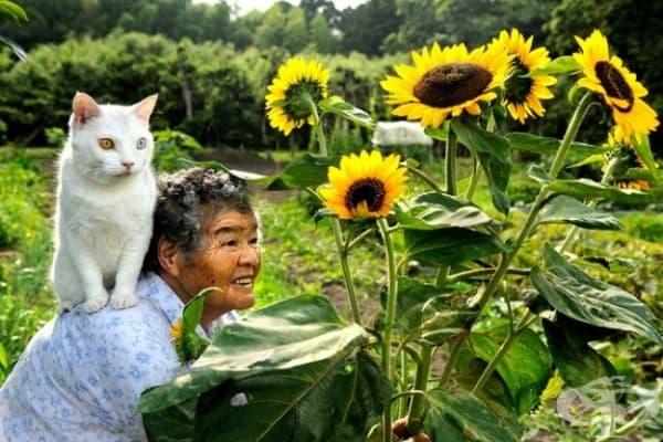 Тази котка доближава до тази 80-годишна дама, докато е навън. От този момент нататък те са неразделни.