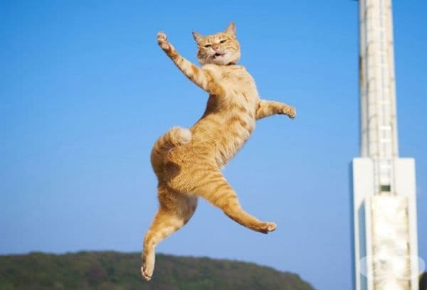 Котките са обикновен домашен любимец с особено чувство на изразяване на емоциите си.