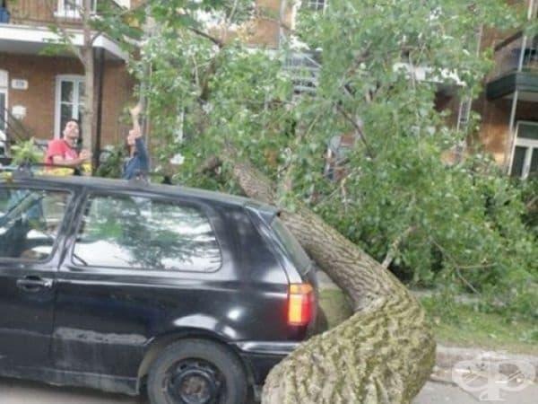 Дървото порасна само заради този инцидент.