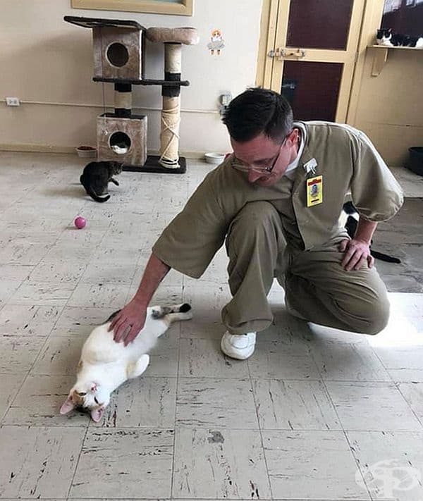 Програмата бързо се оказва полезна както за котките, така и за затворниците.