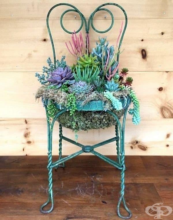 Старият пребоядисан стол е отлично място за красиви цветя в градината.
