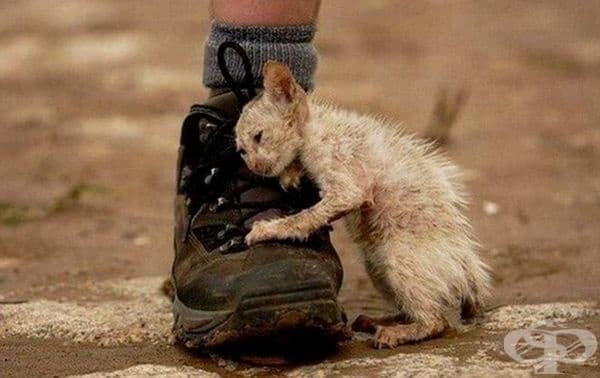 Съществуват много бездушни хора към страданието на беззащитните животни.