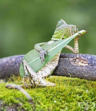 Ранго свири на китара.