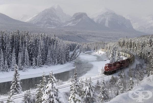 Товарен влак в Morant's Curve.