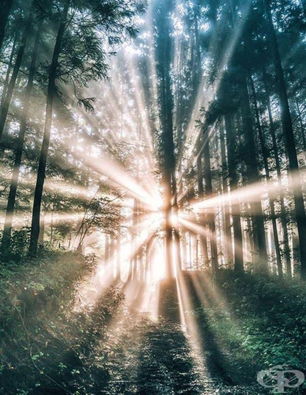Слънчеви лъчи през дърветата.