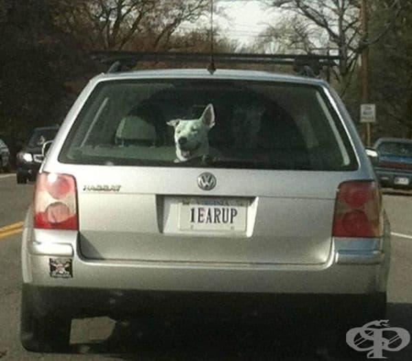 Послушно куче.