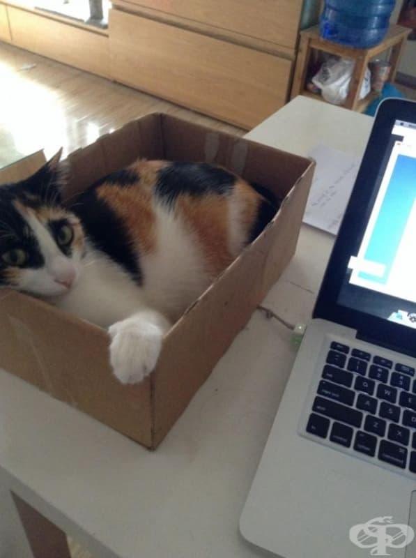 Без повече котки върху клавиатурата.