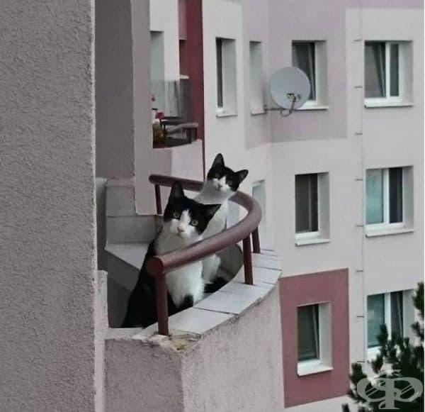 Само се запознайте с новите ми съседи.