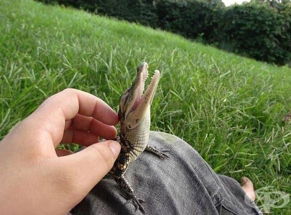 Просто малко крокодилче.
