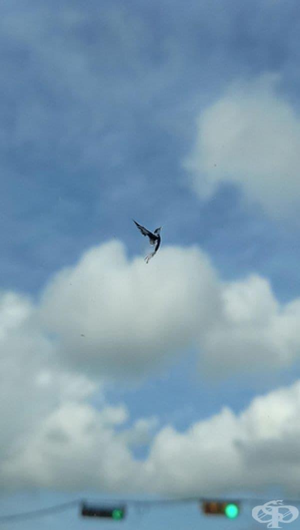 Петно във формата на птица, намиращо се на предното стъкло на автомобил.