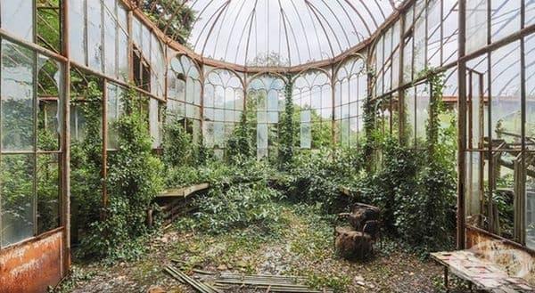 Сега тази стара оранжерия е собственост на Майката Природа.