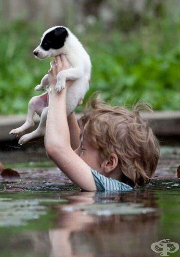 Момче се потапя в дълбоките води на наводнена Сърбия, за да спаси живота на това кученце.