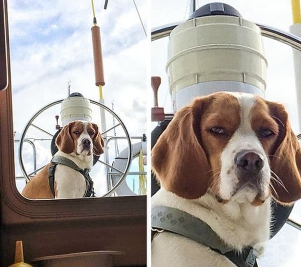 """""""Кучето ми не беше впечатлено, че трябва да стои отвън."""""""