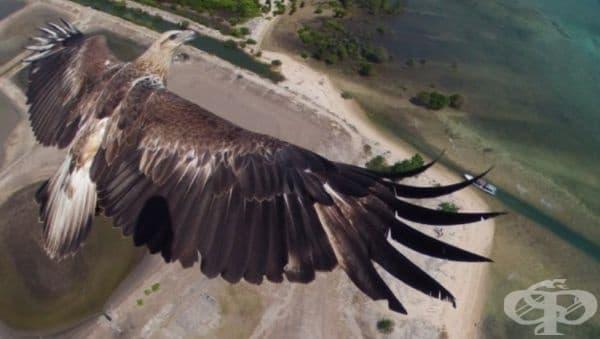 Летящ орел над национален парк в Бали, Индонезия.