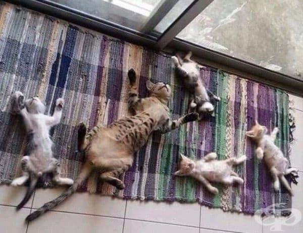 ... и дрямка само тогава, когато децата спят.