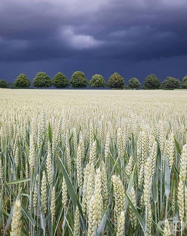 Красотата на природата точно преди буря.
