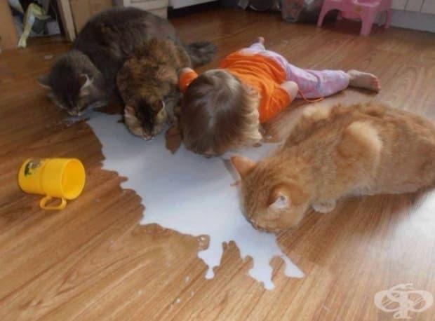 Вместо да плачеш от разлятото мляко, по-добре го оближи от пода!