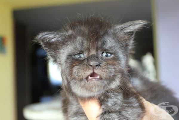 Много потребители на социалните мрежи я определят като котката с човешко лице.