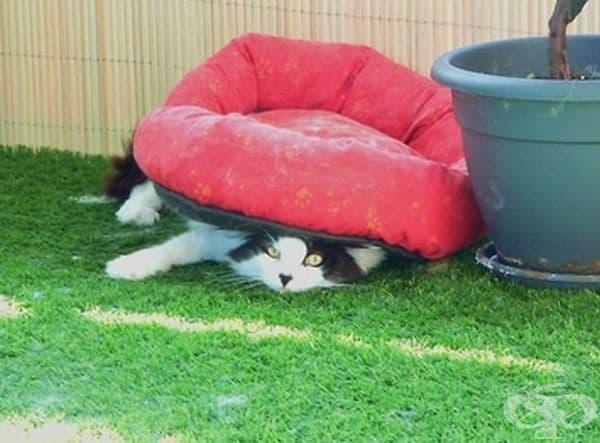 Ето как може да използвате леглото си.