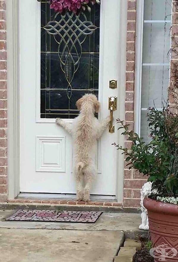"""""""Кучето ми избяга по време на разходка. След няколко часа търсене се прибрах и го заварих ето така""""."""