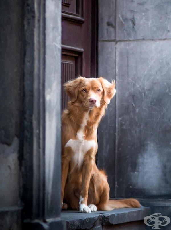 """Второто място в категорията """"Портрет"""". Фотограф: Катарзина Симиняк."""