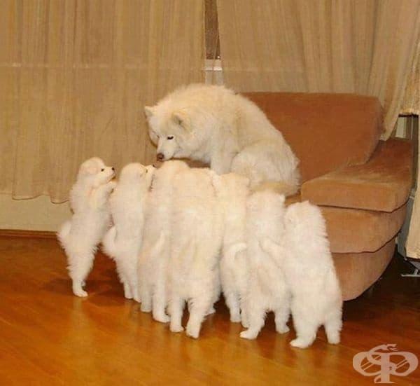 Тази майка се нуждае от почивка, но малките са на друго мнение.