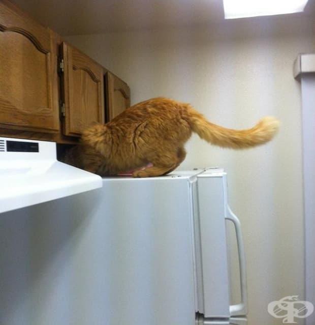 """""""Оставих вратата на апартамента отворена за 5 минути и се случи това. Не е моята котка."""""""