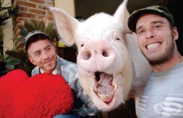 Ерек и Стив бързо разбират, че техният домашен любимец ще порсне доста, но това не ги е притеснило.