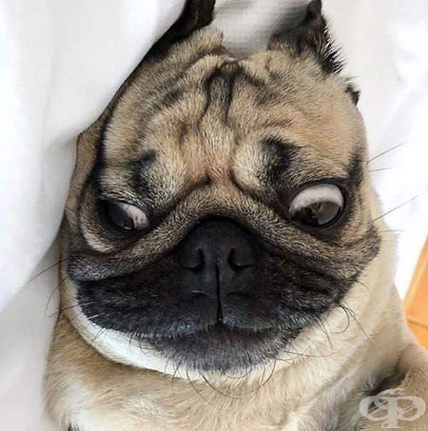 """""""Виждам това лице всяка сутрин като се събудя""""."""