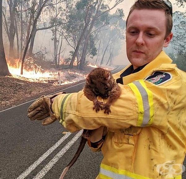 20 снимки показват, че има надежда в борбата срещу огромните пожари в Австралия