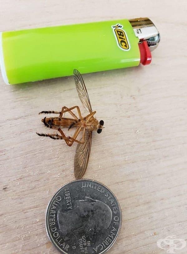 Гигантски комар от Мисисипи.