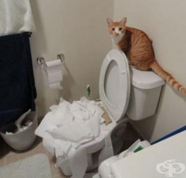 Спряла е до тук, защото тоалетната хартия е свършила!