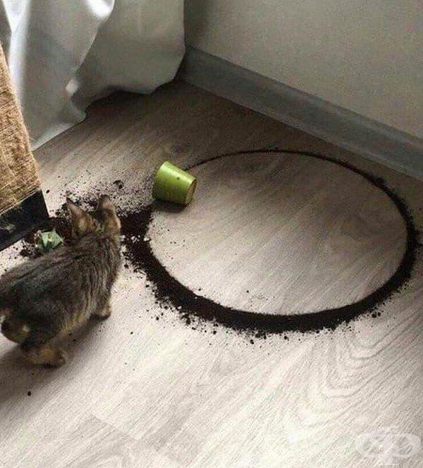 Котето е създало идеален кръг, по невнимание.
