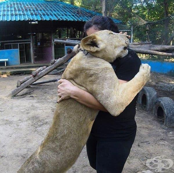 Какво ли е чувството да получиш прегръдка от такова силно животно?